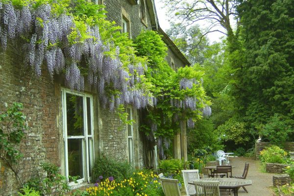 Wisteria clad front of house and terrace